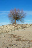 Tree at the shore of the Rhine Rhein Stock Photo