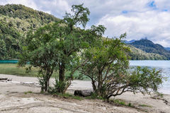 Tree on the shore, Road of the Seven Lakes, Argentina Royalty Free Stock Photo