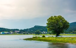 Tree on the shore of Zemplinska Sirava in summer. Beautiful and calm scenery of one of the largest Slovakian body of water. Kaluza resort village in the royalty free stock photo