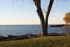 Tree on Shoreline in Park. A tree on the shoreline of Lake Erie in Edgewater park in downtown Cleveland Stock Photo