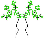 Tree shown Stock Image