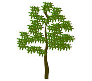 Tree shown Royalty Free Stock Photography