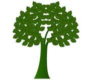 Tree shown Royalty Free Stock Photo