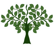 Tree shown Royalty Free Stock Image