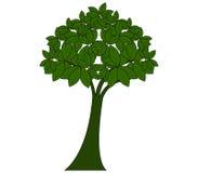 Tree shown Royalty Free Stock Photos