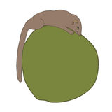 Tree Shrew Stock Photography