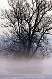 Tree shrouded in mist. Scenic view of silhouetted tree shrouded in mist in Wintry countryside Royalty Free Stock Images
