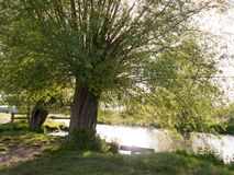 A tree at the side of a river in the countryside looking relaxin Royalty Free Stock Image
