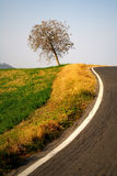 Tree by the side of a road. A lone tree by the side of a gently curving road royalty free stock photos