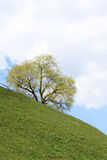 Tree on a sidehill in spring. Photo is taken in Russia Stock Images