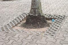 Tree on sidewalk Stock Images