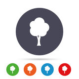 Tree sign icon. Forest symbol. Royalty Free Stock Image