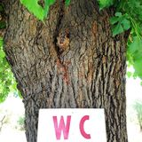Tree with sign WC Stock Image