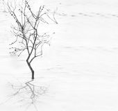 Tree silhoette with shadow on the snow Royalty Free Stock Image