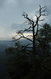 A tree silhouet on a cloudy sky. A gorgeous though slightly shadowy view from Czech part of Saxon Switzerland National Park Stock Image