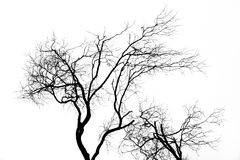 Tree silhouette. Isolated over white background Stock Image