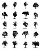 Tree silhouette Royalty Free Stock Photography