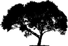 Tree silhouette. Isolated tree silhouette from white background Stock Images