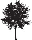 Tree Silhouette 14 Stock Photos