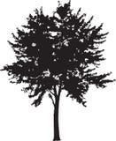 Tree Silhouette 14 Stock Photos