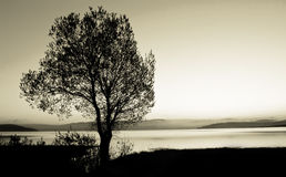 Tree silhouette. Black and white landscape Royalty Free Stock Photos