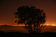 Tree at night. A silhouette of a tree at night with city lights on the background Royalty Free Stock Photography
