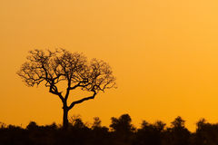 Tree silhouette Stock Image