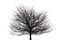 Tree silhouette. Black tree silhouette on white in isolation royalty free stock images