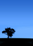 Tree Silhouette Royalty Free Stock Image
