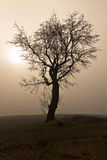 Tree in silhouette Stock Images