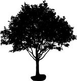 Tree silhouette Royalty Free Stock Photos