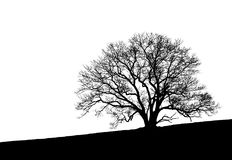 Free Tree Silhouette Royalty Free Stock Photo - 3653395