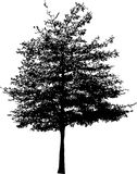 Tree silhouette Stock Images