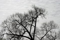 Tree silhouette. On white ice background stock photo