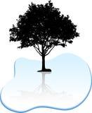 Tree silhouette. Stock Photos