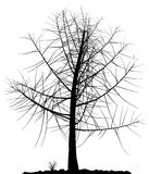 Tree silhouette. Stock Photography