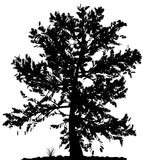 Tree silhouette. Royalty Free Stock Photography