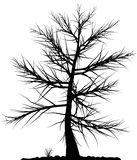 Tree silhouette. Royalty Free Stock Images