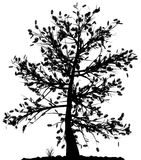 Tree silhouette. Royalty Free Stock Photo