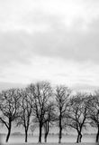 Tree silhouette. In winter as background Stock Photography