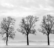 Tree silhouette. Three tree silhouette at winter Royalty Free Stock Photography
