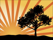 Tree Silhouette. D against the setting sun stock illustration