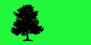 Tree silhouette Royalty Free Stock Photos