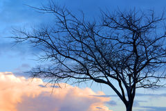 Free Tree Silhouette Stock Photography - 8376812