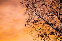 Tree Silhouette. Silhouette of a suburban tree at sunset Stock Images