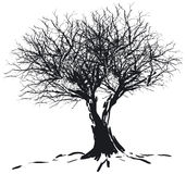 Tree silhouette. Silhouette of a bare  winter tree - additional ai and eps format available on request Stock Photography