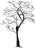 Tree silhouette. Silhouette of a bare winter tree - additional ai and eps format available on request Royalty Free Stock Photos