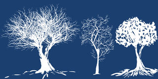 Tree silhouette. Three Silhouettes of winter trees - additional ai and eps format available on request Stock Photos