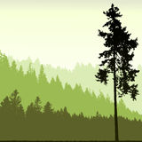 Tree silhouette on an abstract background. 2d vector Stock Photo