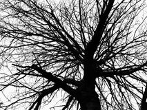 Tree silhouette. Abstract natural decorative graphic  background with pattern of black tree branches silhouettes over light grey backdrop. Can be used as a Royalty Free Stock Photos